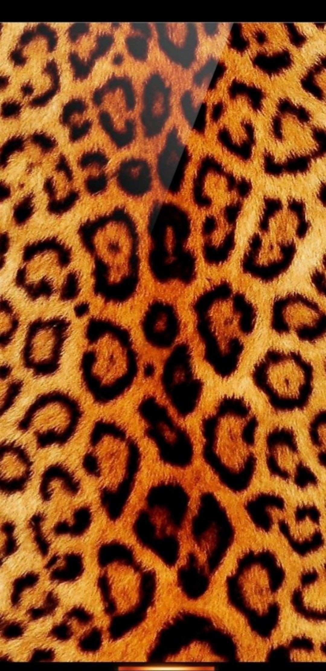 Pin by Nicole Frohloff on Multi Animal Print Wallpaper